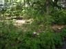 Rhododendron canescens 'Cedar Lane' - Hoary Azalea